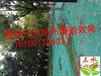 云南武定县客土喷播施工方案绿化护坡花草种子高速边坡基肥资材草籽