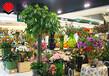 合肥鲜花店装修,若问相思处,花开花落时。
