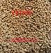 通化市集安市果壳滤料,通化市集安市果壳滤料价格-巩义市金壹净水材料有限公司