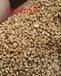 信阳果壳滤料厂家,信阳果壳滤料价格-金壹净水材料有限公司