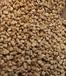 三亚果壳滤料厂家,三亚果壳滤料价格-金壹净水材料有限公司