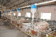 产房母猪电子饲喂器第二代产房母猪饲喂系统--益爱堡