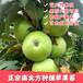 4年苹果树产量多少4年苹果树长多粗