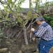 云贵川适合种植樱桃吗适合南方种植的樱桃品种早大果樱桃树