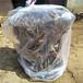 供应贵州安顺梨树苗2年3年梨树苗价格