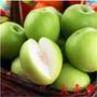 当年结果枣树苗价格出售第2年结果枣苗图片