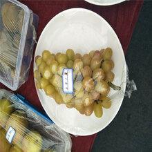 巨峰系葡萄果穗管理技术哪里有卖巨峰葡萄苗的地方
