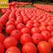阳澄湖耐老化红色警戒线浮子批发(景观图)