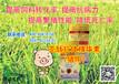 壳肽抗体精华素(猪用)---猪长的慢有四大原因!