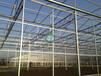 歌珊温室文洛型玻璃温室连栋全玻璃温室建造玻璃温室安装