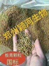 河南郑州首家中药提取物代加工厂郑州颖河生物板青颗粒图片