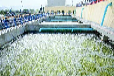 污水如何处理/污水处理工程