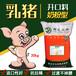 河北秦皇島銀龍乳豬奶粉型顆粒開口飼料高營養抗拉稀銀龍飼料廠直銷