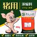 邯鄲豬用濃縮料高蛋白抗病力強催肥快