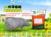 懷孕母豬營養飼料配方:懷孕母豬預混料