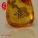 天津为什么蜜蜡这么值钱,哪里的琥珀蜜蜡品质较好?