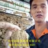 广州洗沙泥浆压滤机专业快速