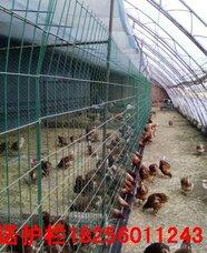 芜湖养殖围栏网,芜湖养殖围栏网厂家,芜湖养殖围栏网规格