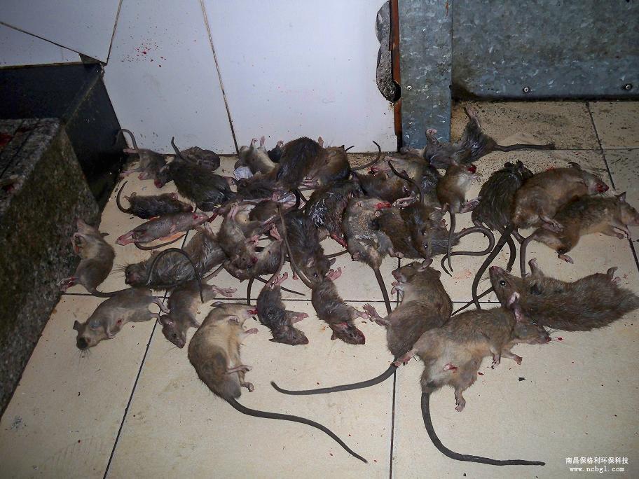 广州番禺防老鼠仓库防老鼠灭老鼠除四害蚊子蟑螂