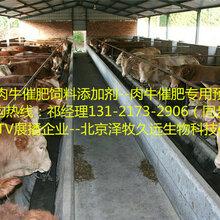 牛羊调理肠胃专用的添加剂