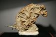 哪里可以免费鉴定古生物化石