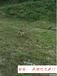 长沙狗狗训练基地