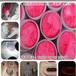 超亮水泥厂荧光粉粉红色管道测漏用荧光颜料电厂丝印油墨绿色荧光粉用量