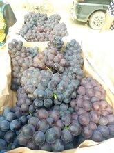 山东京亚葡萄图片