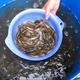 鱼苗养殖利润高图