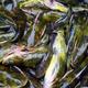 黑龙江销售鱼苗养殖图