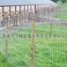 供西宁草原围栏网和青海草原护栏网质量优