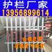厂家欢迎莆田涵江塑料花园围栏_儿童防护栏_绿化隔离栏
