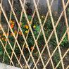 竹篱笆)隆安县pvc幼儿园栏杆(各省)怎么样?
