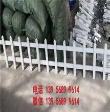 洛阳瀍河回族塑料绿化带小室外户外厂商出售图片
