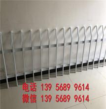 福建省pvc绿化栅栏pvc绿化栏杆是您的好选择!图片