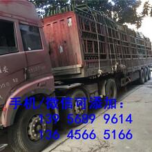 衢州衢江pvc护栏pvc护栏pvc护栏厂家列表,安装指导图片