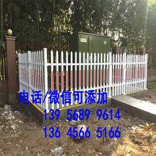 临泉县竹栅栏户外竹篱笆紫竹拉网庭院围栏护栏价格划算图片