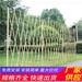 管城回族竹篱笆pvc护栏pvc围墙栅栏(中闻资讯)