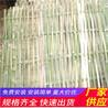 竹栅栏围栏