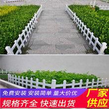 福建厦门竹片栅栏草坪围栏厂家报价(中闻资讯)图片