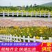 福州鼓楼竹篱笆pvc护栏菜园子围栏厂栅栏代理商\厂家\现货(中闻资讯)