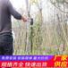 广元青川县木栅栏栏杆竹篱笆(中闻资讯)