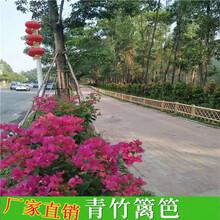 源汇区竹篱笆竹子护栏紫竹篱笆草坪护栏(中闻资讯)图片