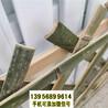 黄冈竹篱笆竹护栏装饰庭院草坪护栏城市市政隔离(中闻资讯)