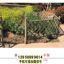 邢台竹篱笆竹篱笆草坪护栏菜园围栏墙厂家电话图片