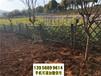 南平武夷山市竹片栅栏竹护栏竹篱笆草坪护栏pvc塑钢护栏