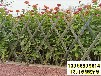 邕寧竹圍欄塑鋼護欄竹籬笆pvc護欄碳化竹圍欄