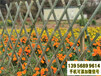 鼓楼区竹篱笆竹护栏围栏户外木桩(中闻资讯)