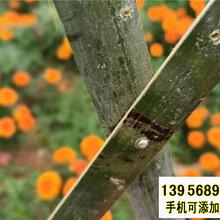 廊坊香河pvc护栏庭院围栏竹篱笆草坪护栏别墅花园园林图片