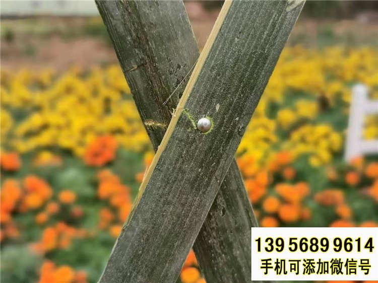 确山竹篱笆 竹护栏绿化栏杆围栏栏杆(中闻资讯)